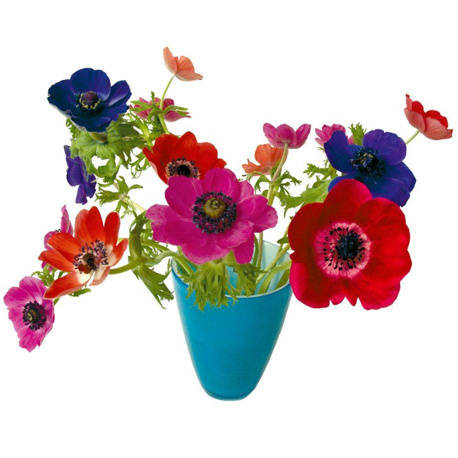 Fltflowers, anemonen, raamstickers