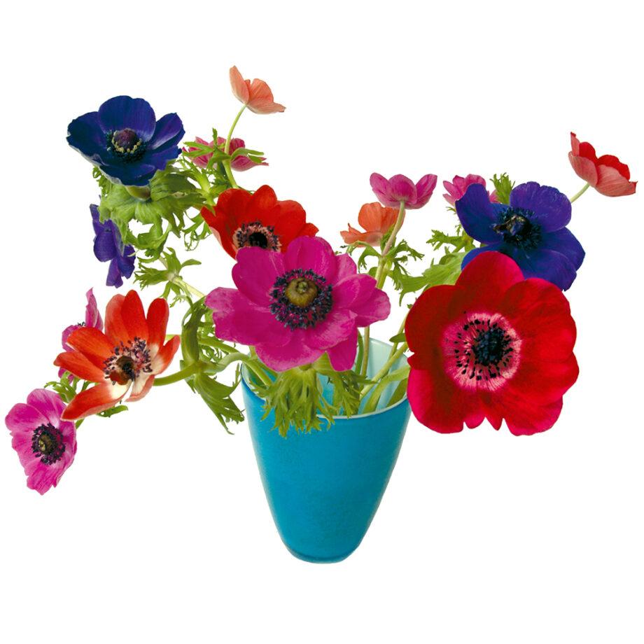 flat flowers, kaart, anemoon, veelkleurig, blauwe vaas