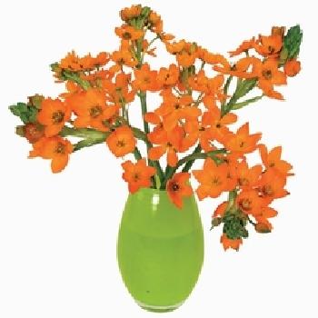 flat flowers, kaart, lelie, oranje